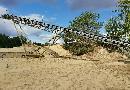 BLEICHERT ROHR-Schwenkhaldenband-convoyeurs à courroie: fixes